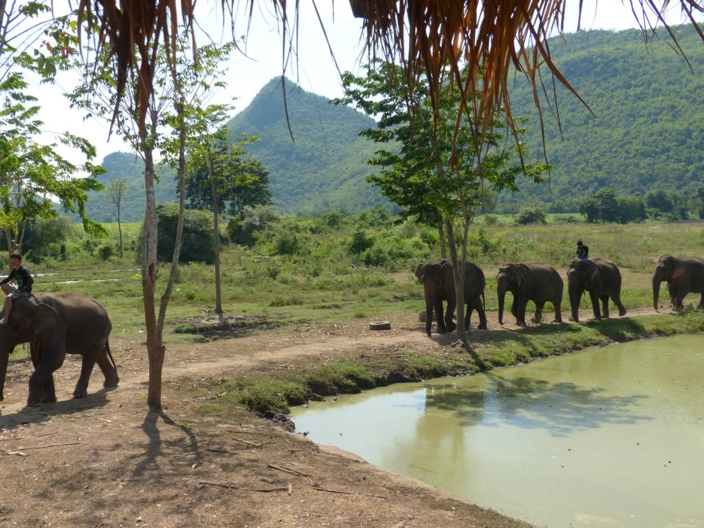 Elefantes paseando en Elephant's World