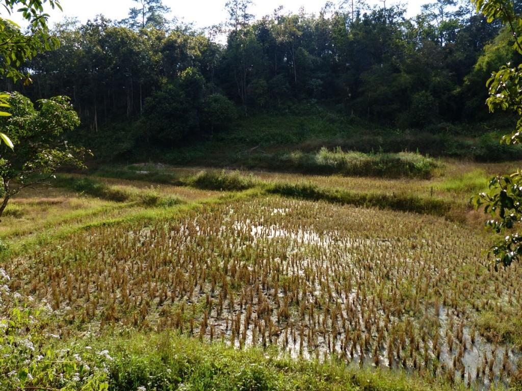 Uno de los muchos arrozales que encontramos de camino
