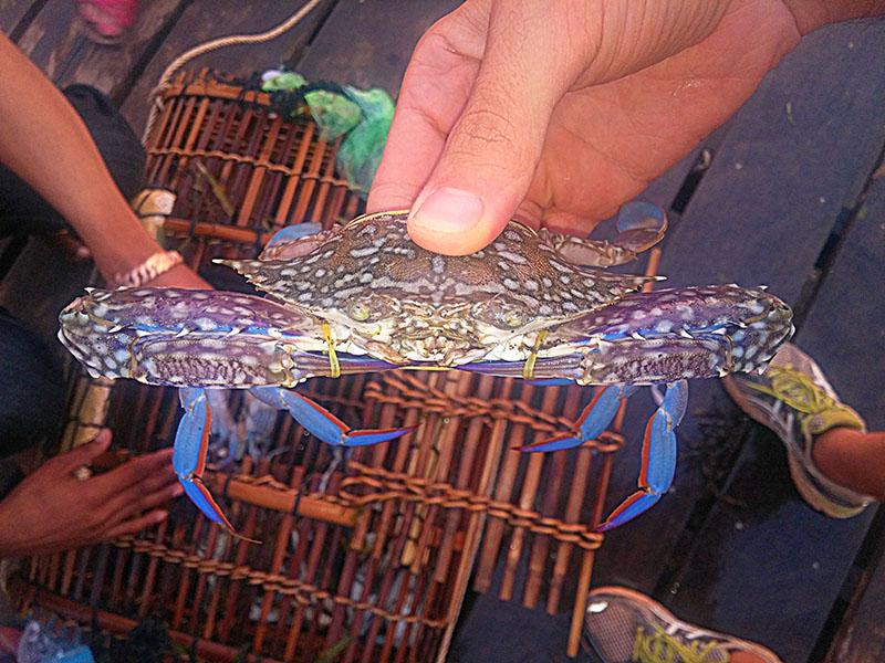 Mercado del cangrejo, en Kep