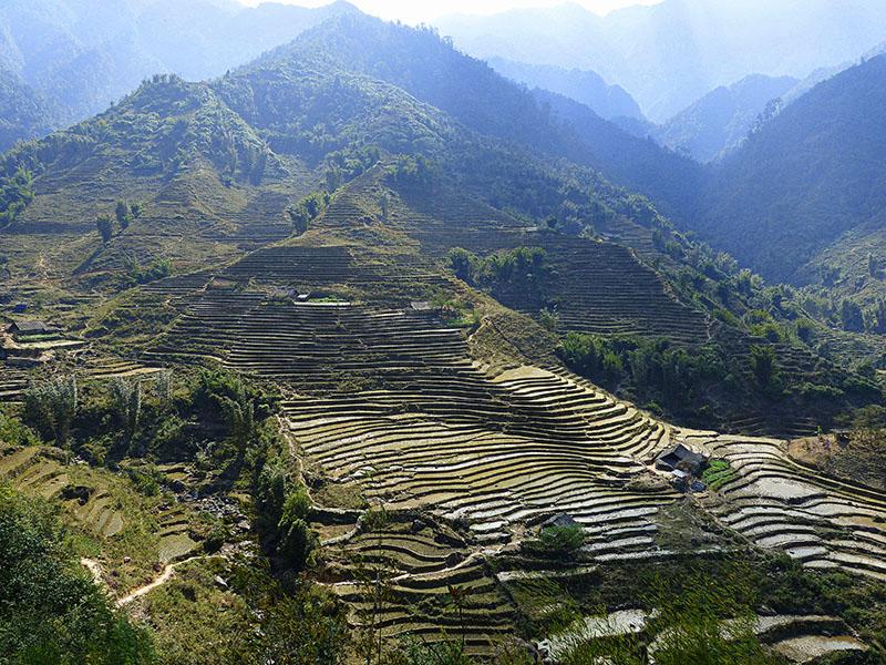 """Montañas """"peladas"""" para las plantaciones de té, en Sapa"""
